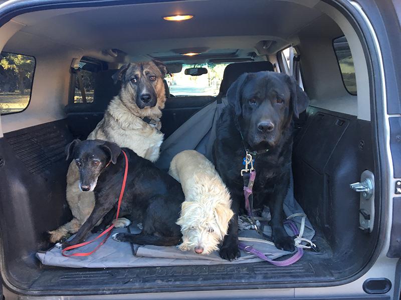 Big Bear Canine School Students