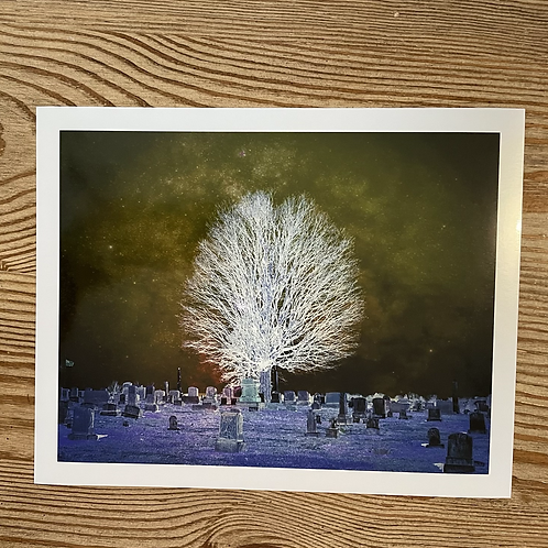 The Old Cemetery Tree Metallic Paper 8x10