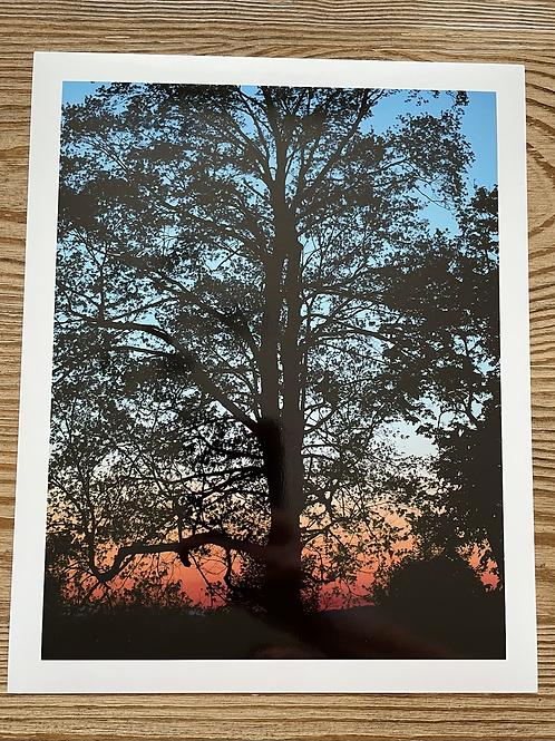 Sunset 8x10 Metallic Paper