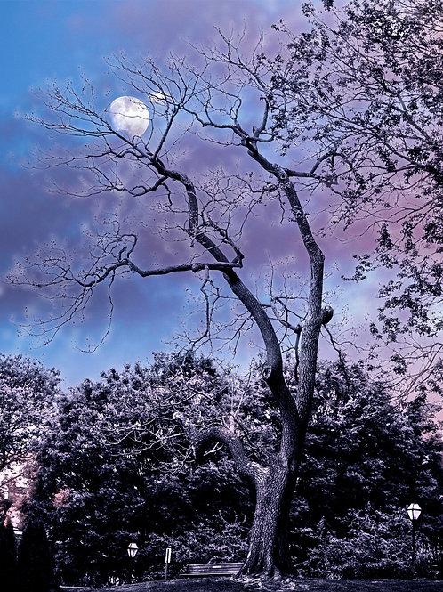 Moonlight Tree 8x10 Metallic Paper