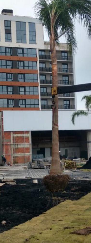 Execução de paisagismo para construtoras
