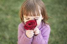 rose-1963807_1920.jpg