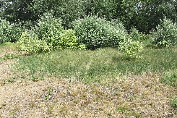 habitat_3516.JPG
