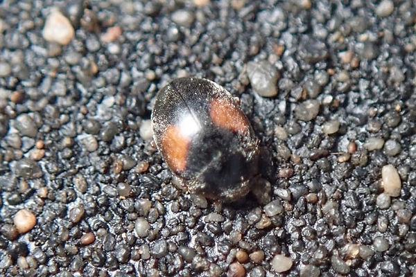 little belhus cp-WA0000.jpg