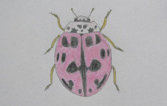 pink ladybird 30.JPG