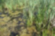 z habitat_4259.JPG
