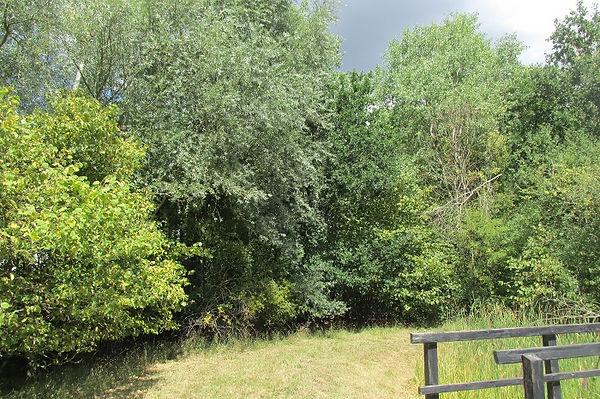 auritus oak FG_4500.JPG