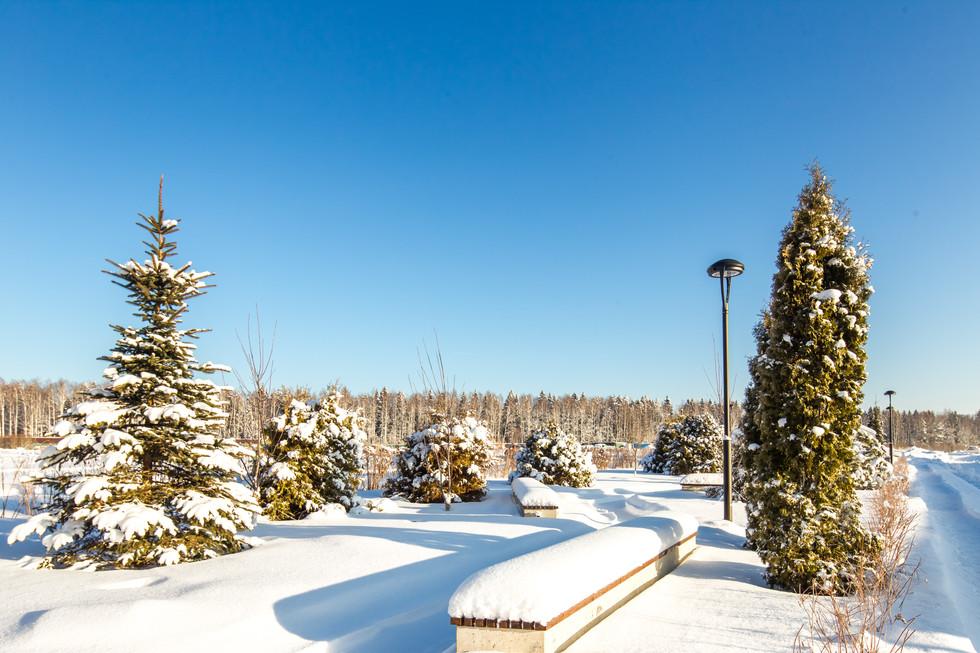 Зима G55G8172.JPG