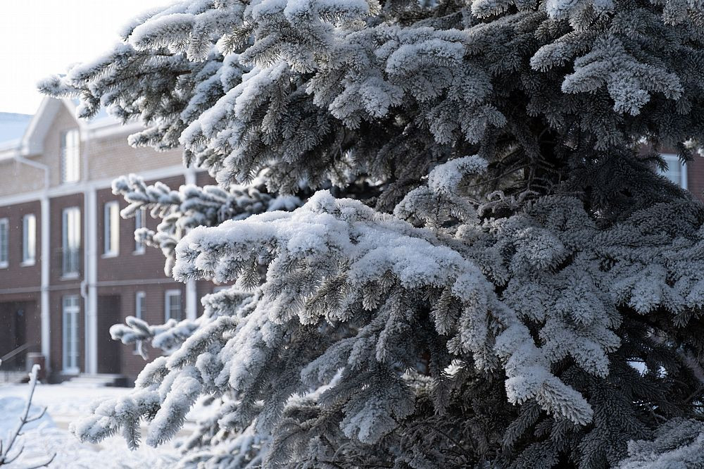 Зима 8443_2___1000_800____nowm.jpg