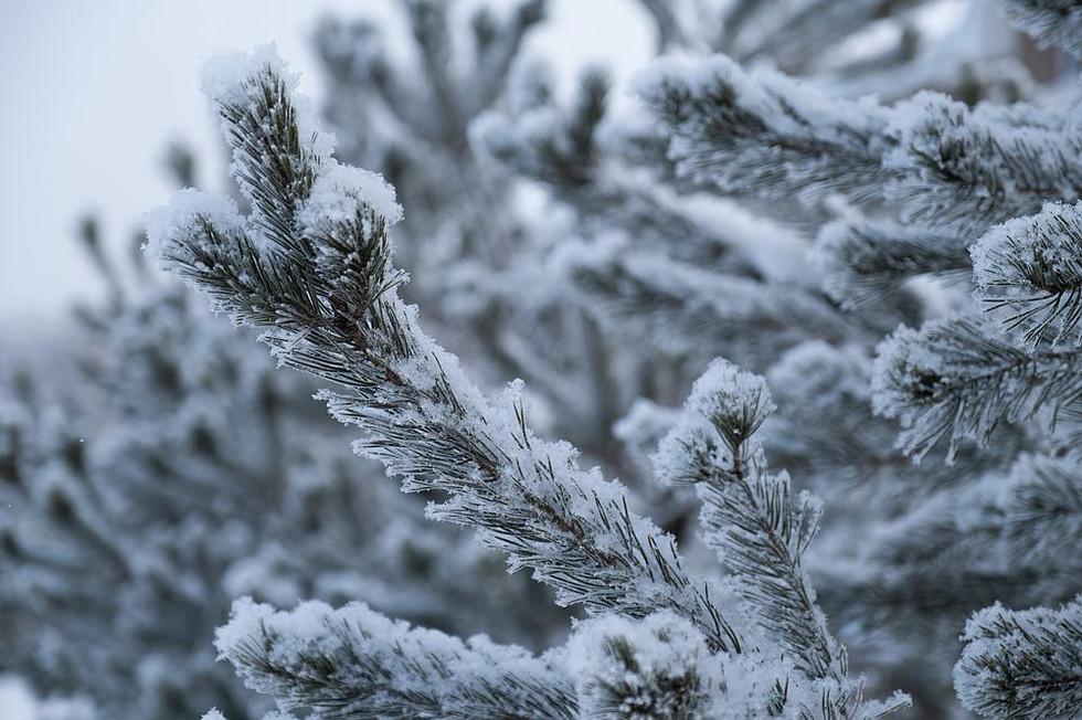 Зима 8417_2___1000_800____nowm.jpg