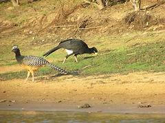 aves pantanal via radical brasil