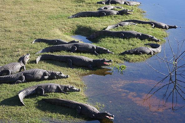 pantanal-montibeller.jpg