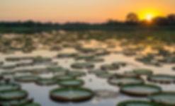 pantanal via radical brasil