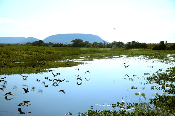 pantanal montibeller 2.jpg