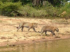VRB_pantanal2.jpg