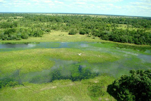 pantanal-montibeller 3.jpg