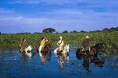 pantanal via radical brasil cavalos
