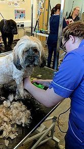 dog grooming, Norfolk