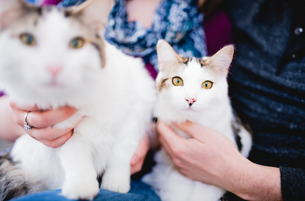 two cats being held by a man and woman with big yellow eyes