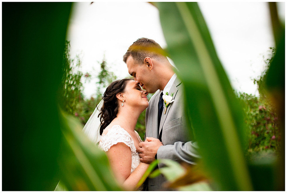 bride and groom snuggle in a cornfield near amherst Ohio