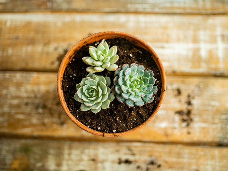 Why Succulents are My #1 Choice for Wedding Florals