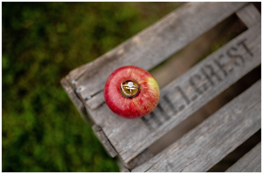 wedding rings sit on top of an apple at hillcrest fun farm in amherst Ohio