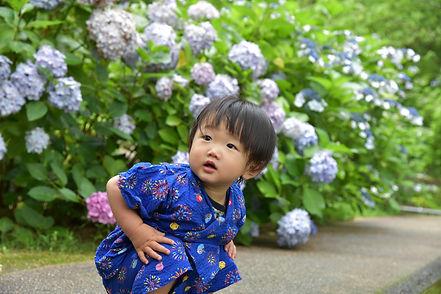 紫陽花と僕