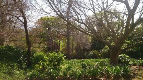 Garden middle.jpg