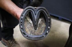 Heart Bar Shoe (Remedial)