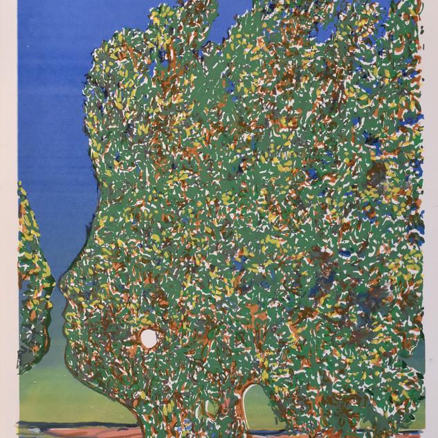 Mayo arbres.JPG
