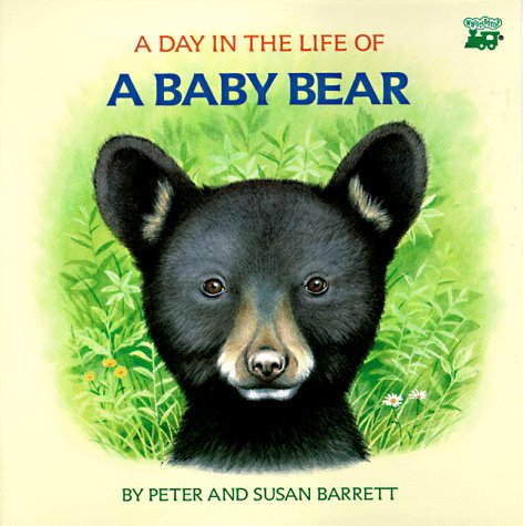 A Day In The Life Of A Baby Bear