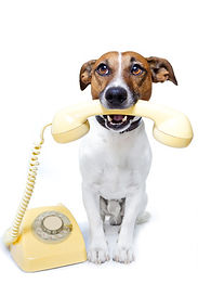 Dog using phone to contact us