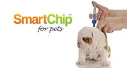 Dog microchipping