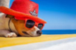 Bau Bau Beach & Pet Hotel Jesolo
