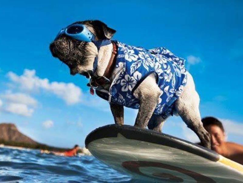 carlino surf