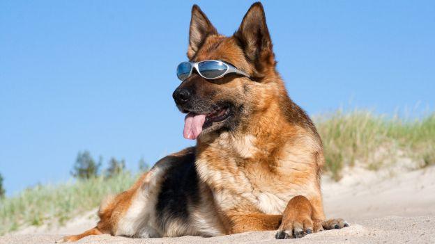 1cane-con-occhiali_come-proteggere-occhi-dal-sole.jpg