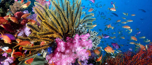 sea life jesolo is the location in jesolo where you can learn about the secrets of the sea