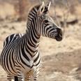 southafrica-0092.JPG