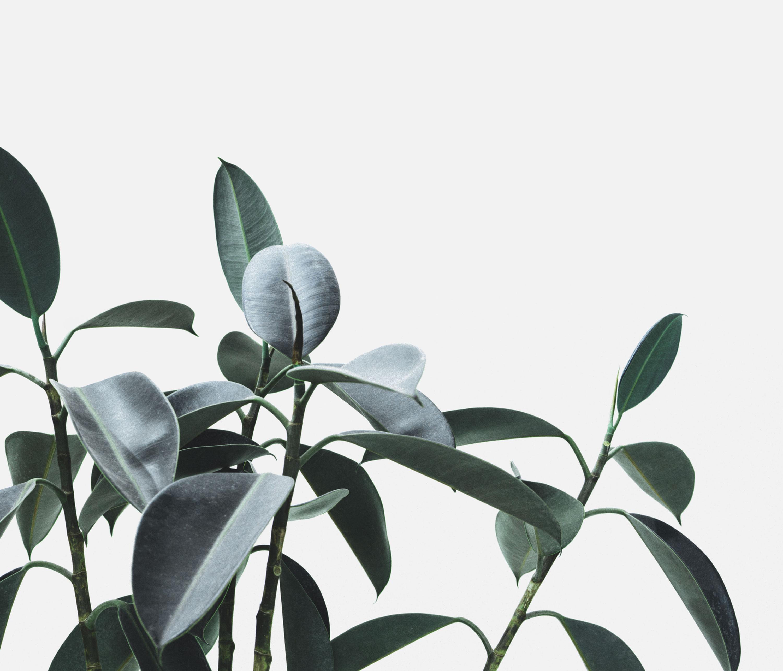 Virtual Plant Care Consultation