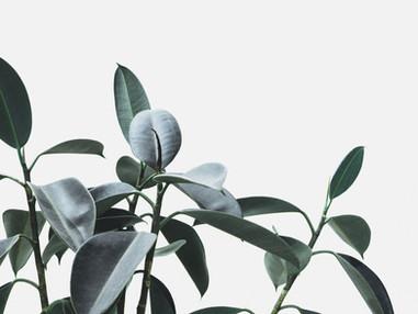 Plantas para ter dentro de casa