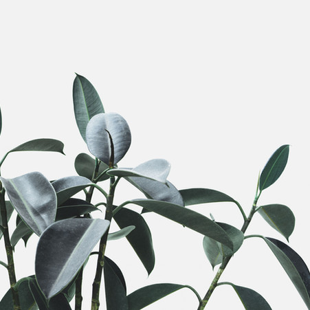 5 Charming Houseplants to Green Up Your Home