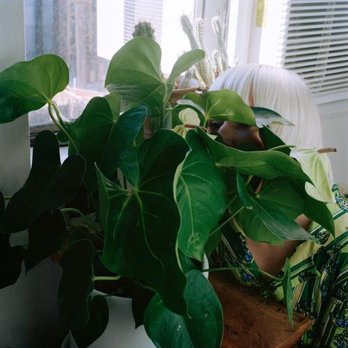 in plain sight [plant]