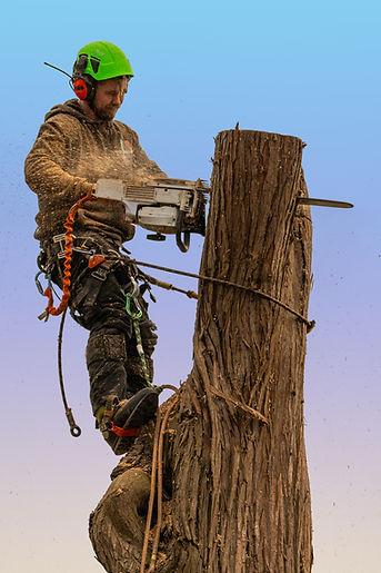 Tree surgeon Chichester.jpg