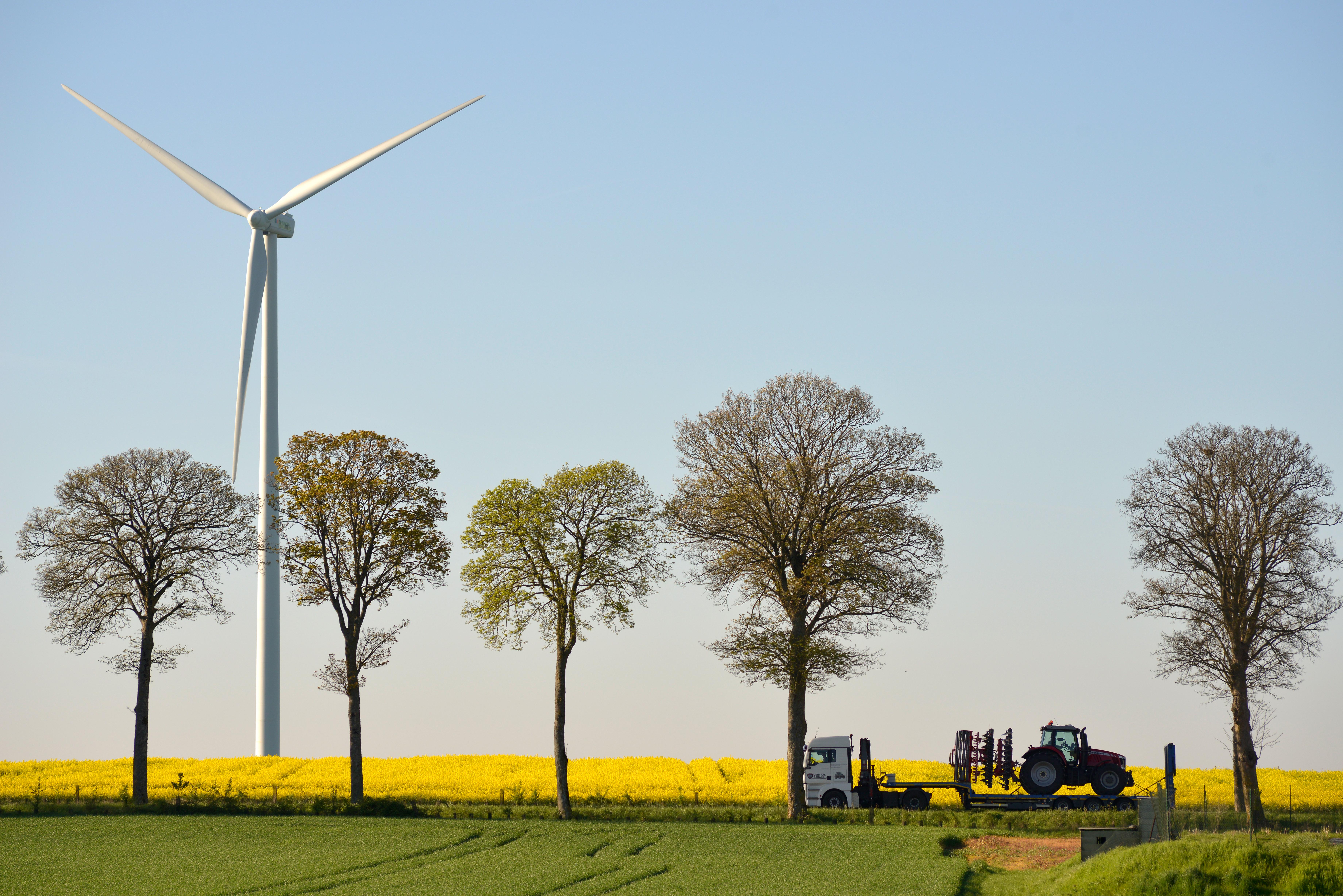 Champ de colza, arbres et éolienne