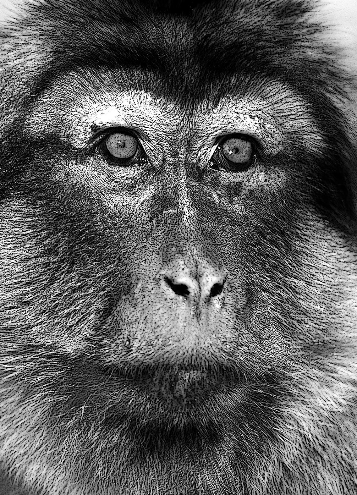 Mon ami, le macaque.