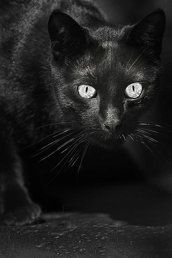 Réglisse le chat