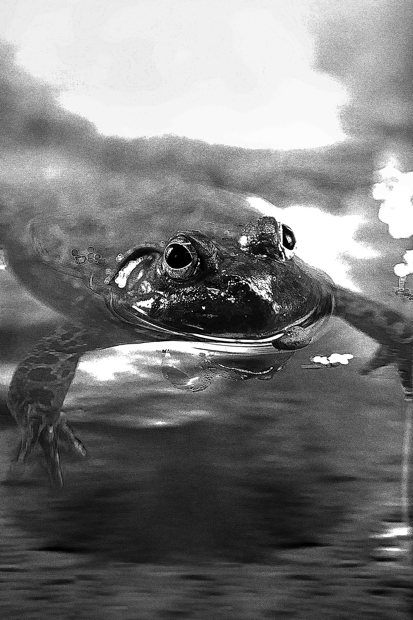 La jolie grenouille