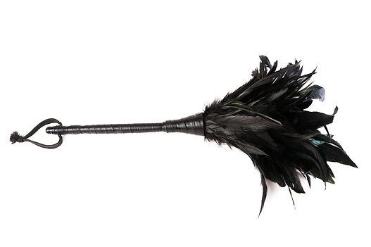 fluffy-feathered-504338420_1258x839.jpeg