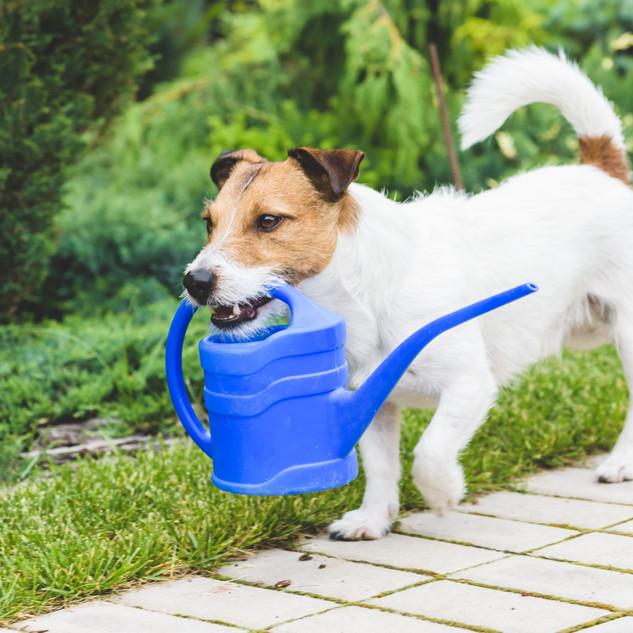 Cute dog as a gardener fetching watering