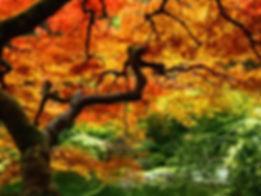 Fall+TREE+1.jpg
